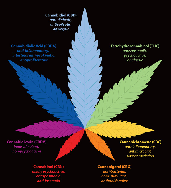 an overview of the use of marijuana and the chemical thc Webmd shows you how medical marijuana works where it's legal,  the higher the level of thc and the more often you use,.